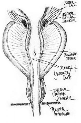 tavole-prostata-3
